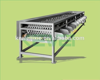 citrus fruit grading / processing equipment / machine